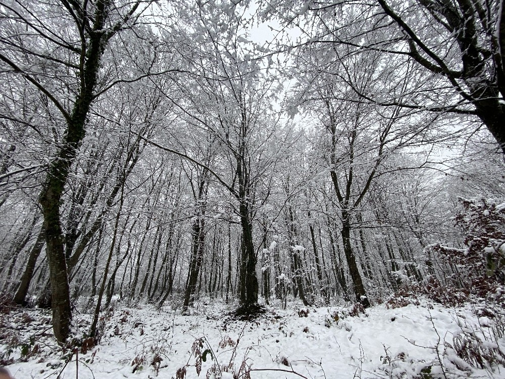 Düzce'de kar, kartpostallık görüntüler oluşturdu