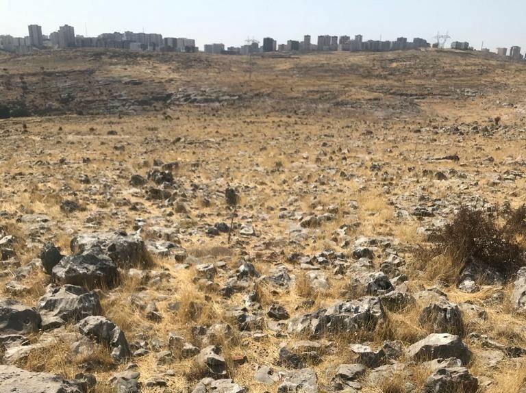 Mardin'de 15 lavanta bahçesi için tarım alanı oluşturuldu