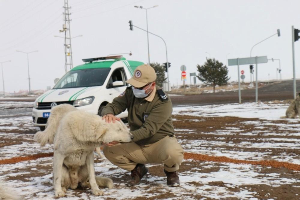 Polis sokak hayvanlarını unutmadı ile ilgili görsel sonucu