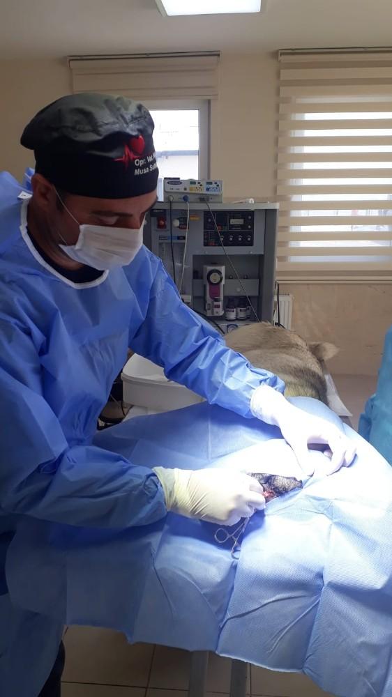 Yaralı köpek barınakta tedavi altına alındı