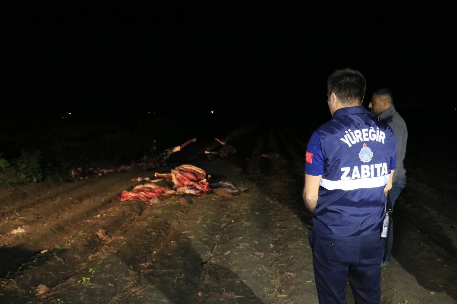 Adana'da boş arazide kesilmiş 3 at ele geçirildi - Adana Haberleri