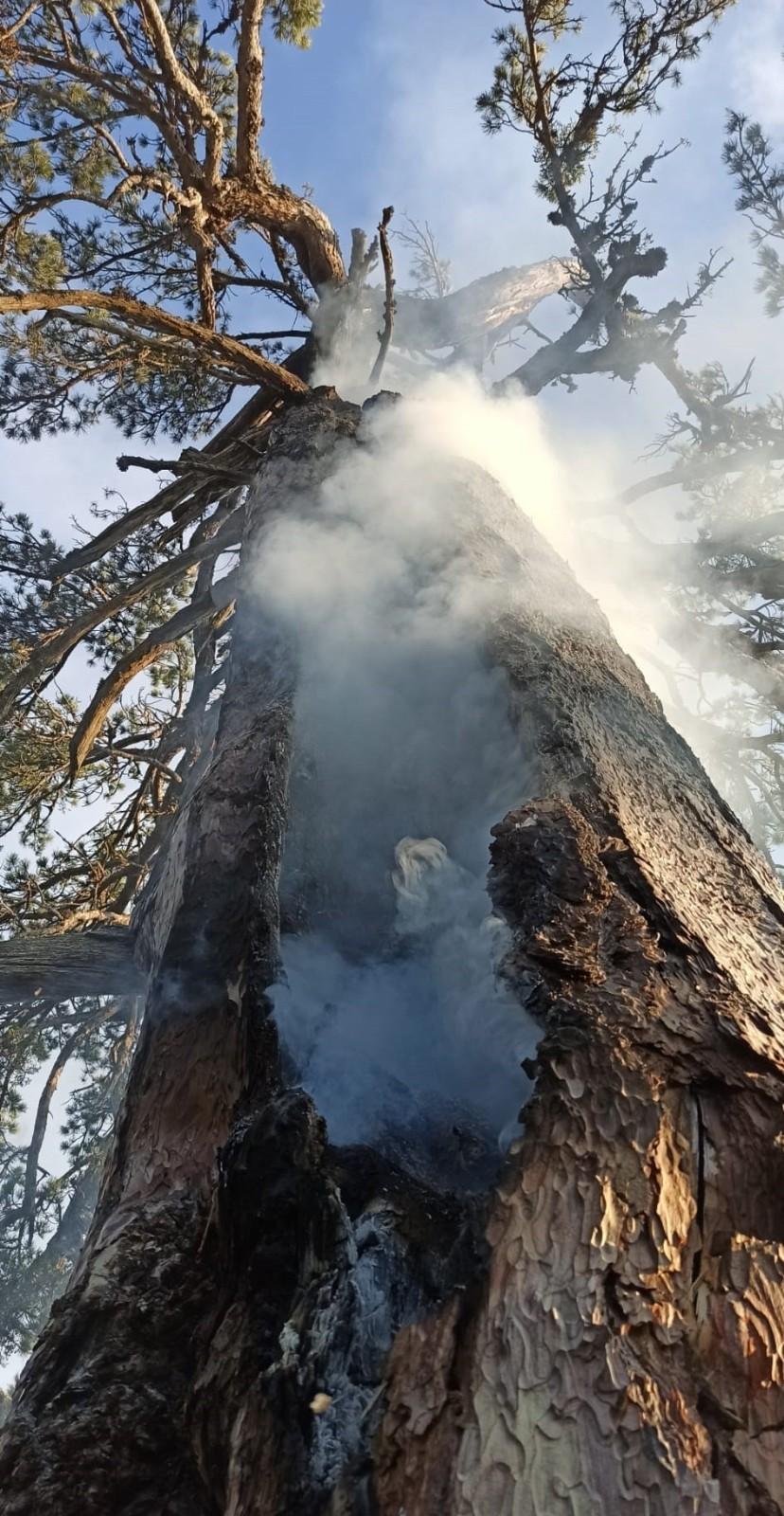 Yıldırım düşen asırlık çam ağacı 3 gündür yanıyor