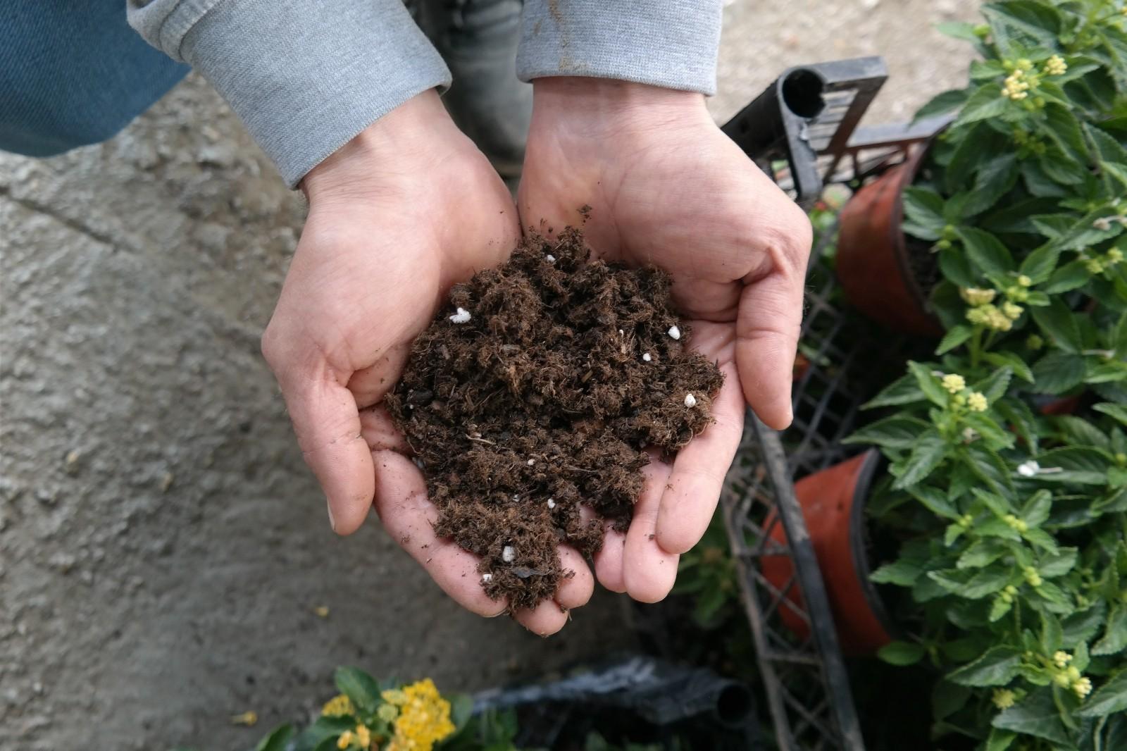 Süs bitkisi ve fide yetiştirme meraklıları bu uyarılara dikkat etmeli