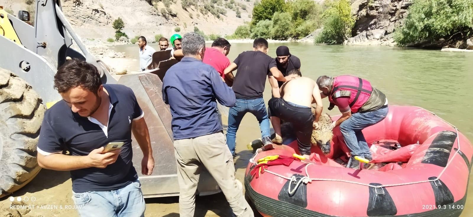 Yaralı ayı botla Zap Suyu'nun karşı tarafına geçirilerek Van'a sevk edildi