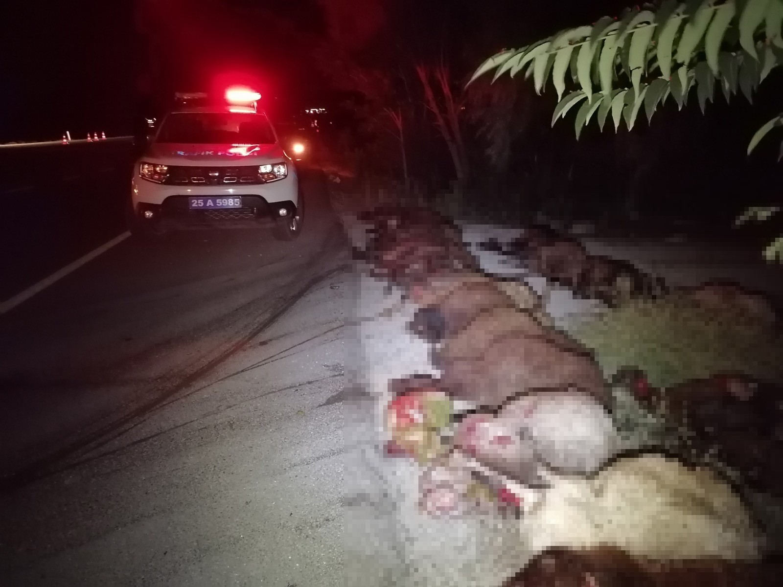 İki otomobil koyun sürüne çarptı: 40 koyun telef oldu - Erzurum Haberleri