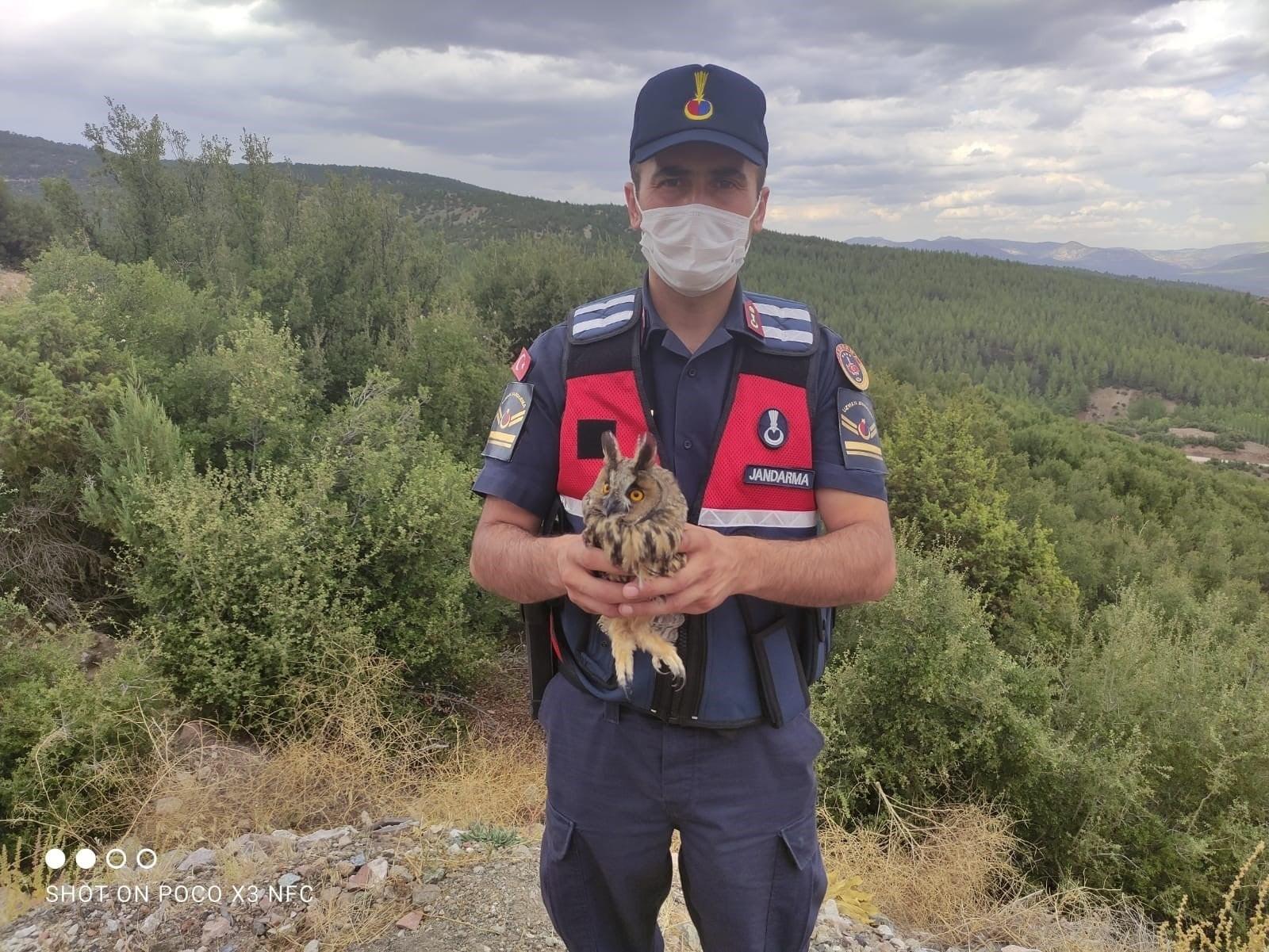 Burdur'da yaralı baykuşu jandarma kurtardı #burdur