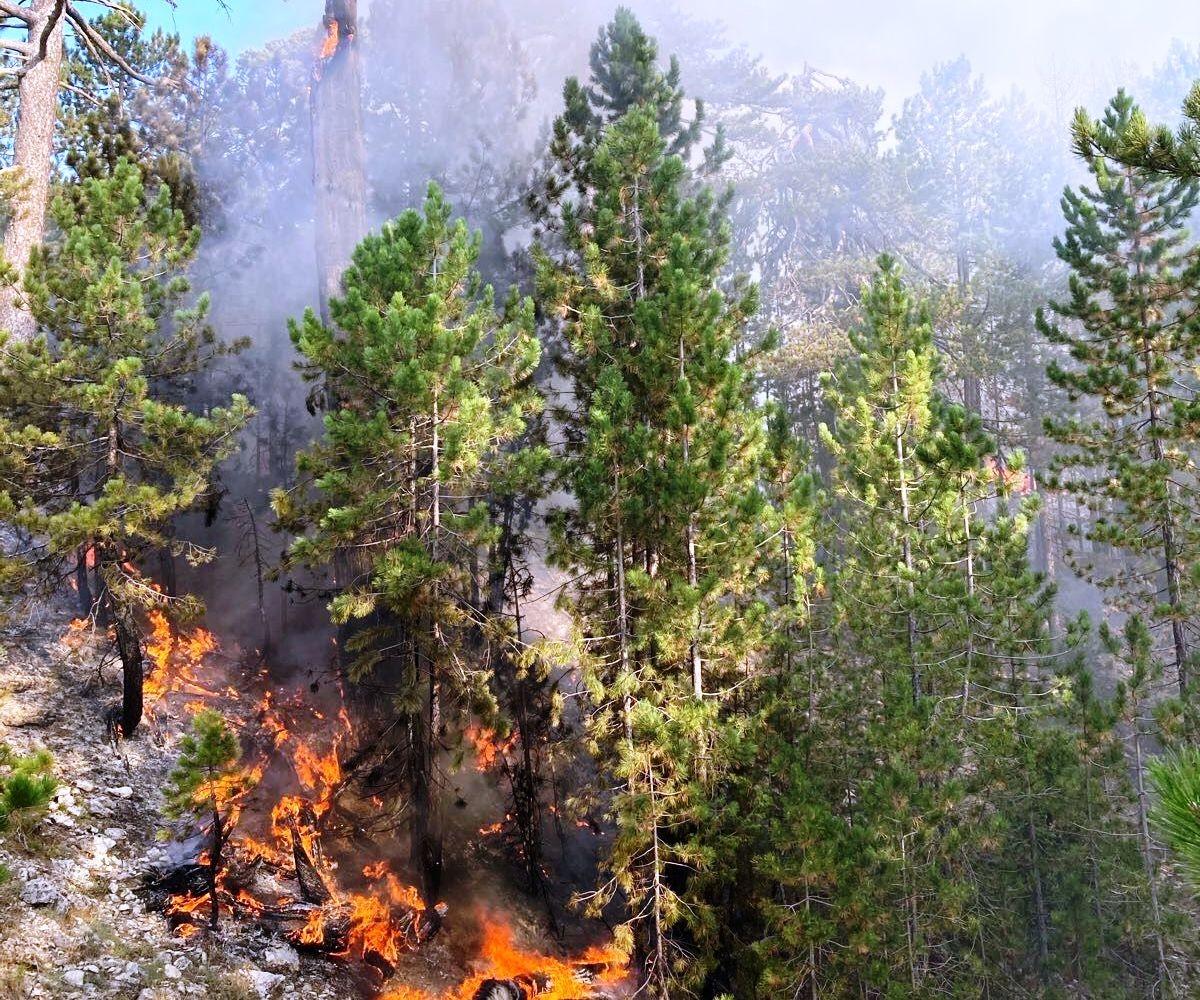 Burdur'daki orman yangını büyümeden söndürüldü #burdur