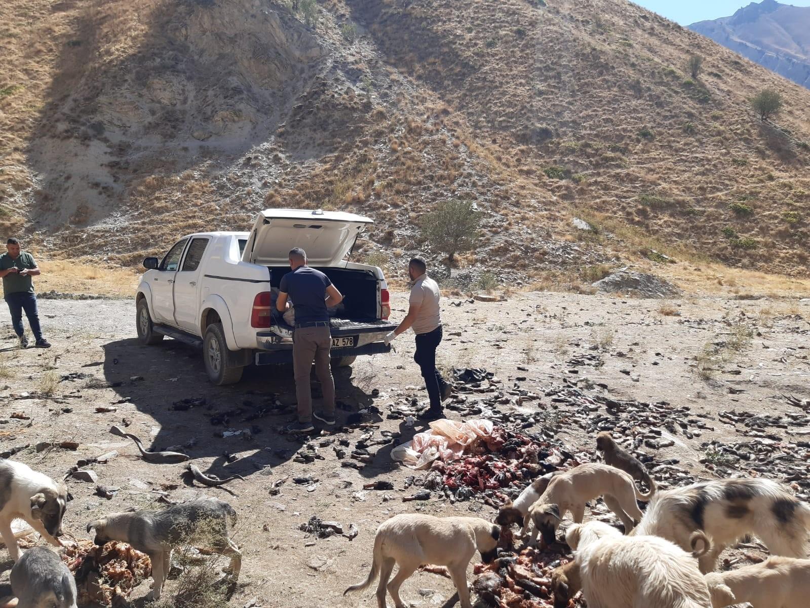 Hakkari'de sokak hayvanlarına sakatat bırakıldı #hakkari