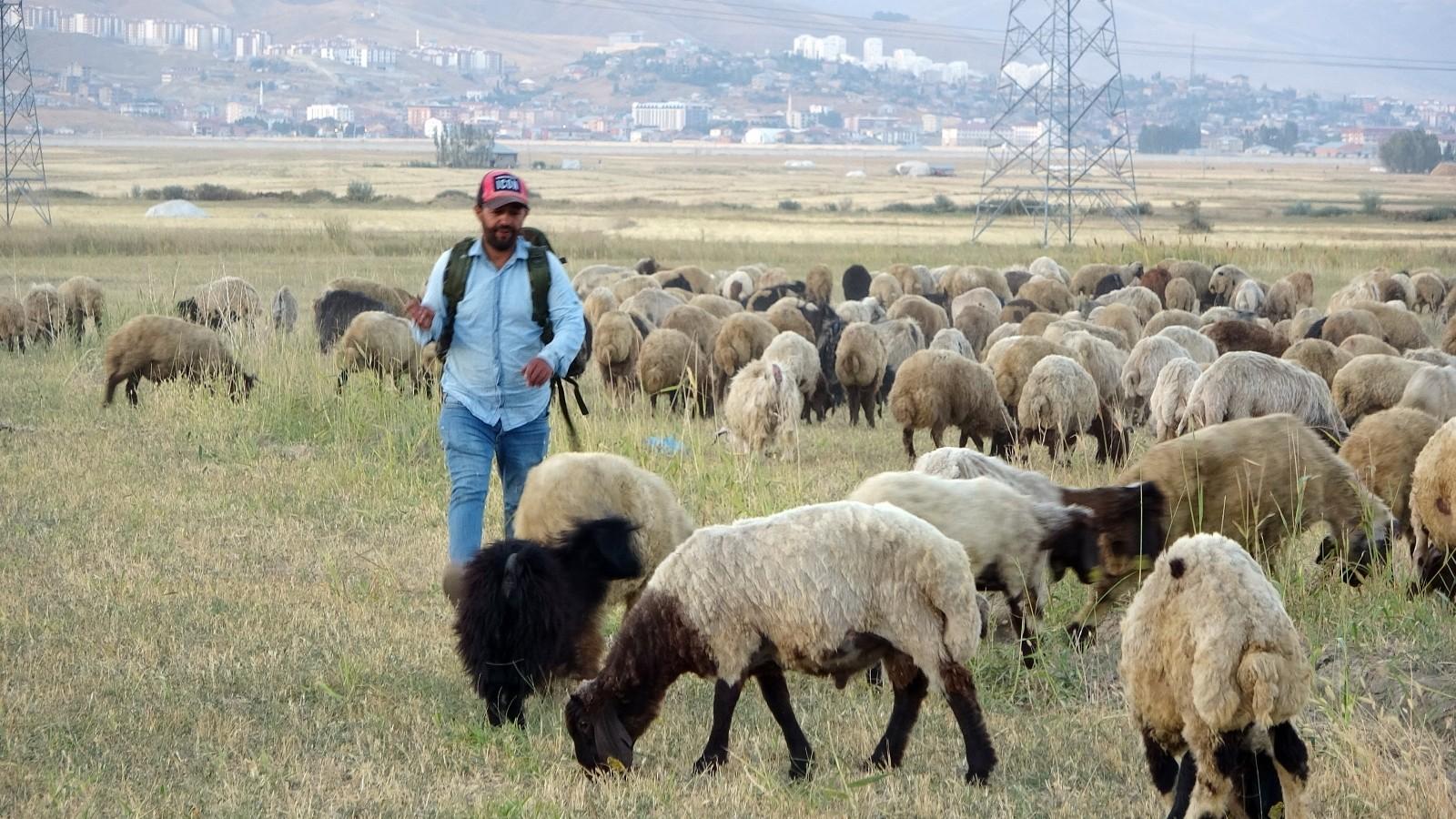Yüksekova'da etkisini sürdüren kuraklık çobanları da vurdu #hakkari
