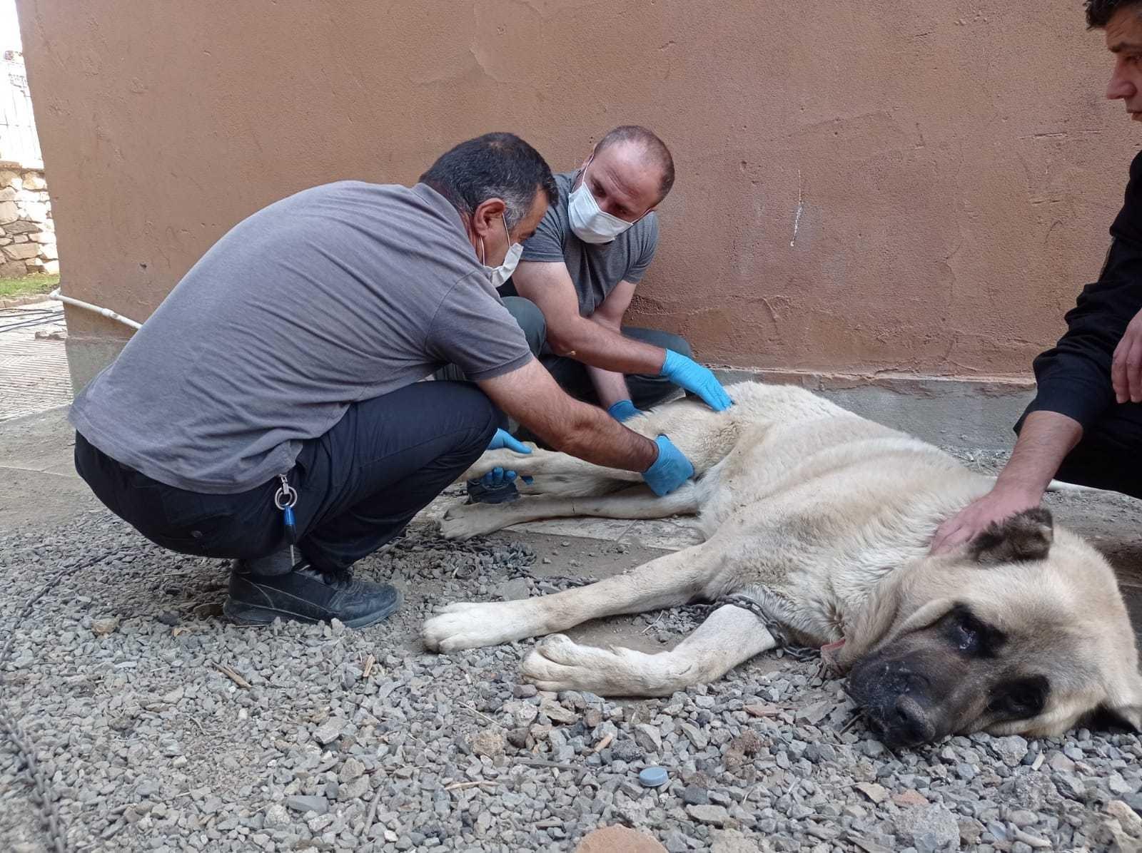 İnşaattan düşen köpeğin ayağı kırıldı #hakkari