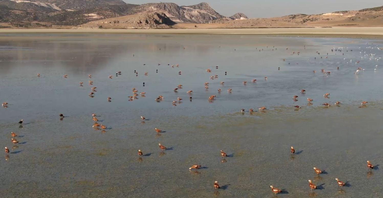 Su seviyesi artan Yarışlı Göl'e kuş akını #burdur
