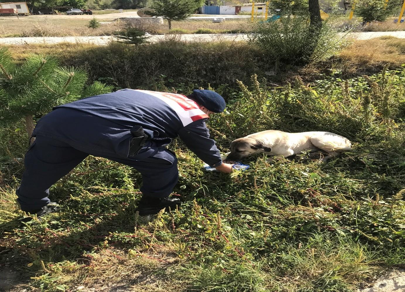 Jandarma sokak hayvanlarına şefkat eli #corum