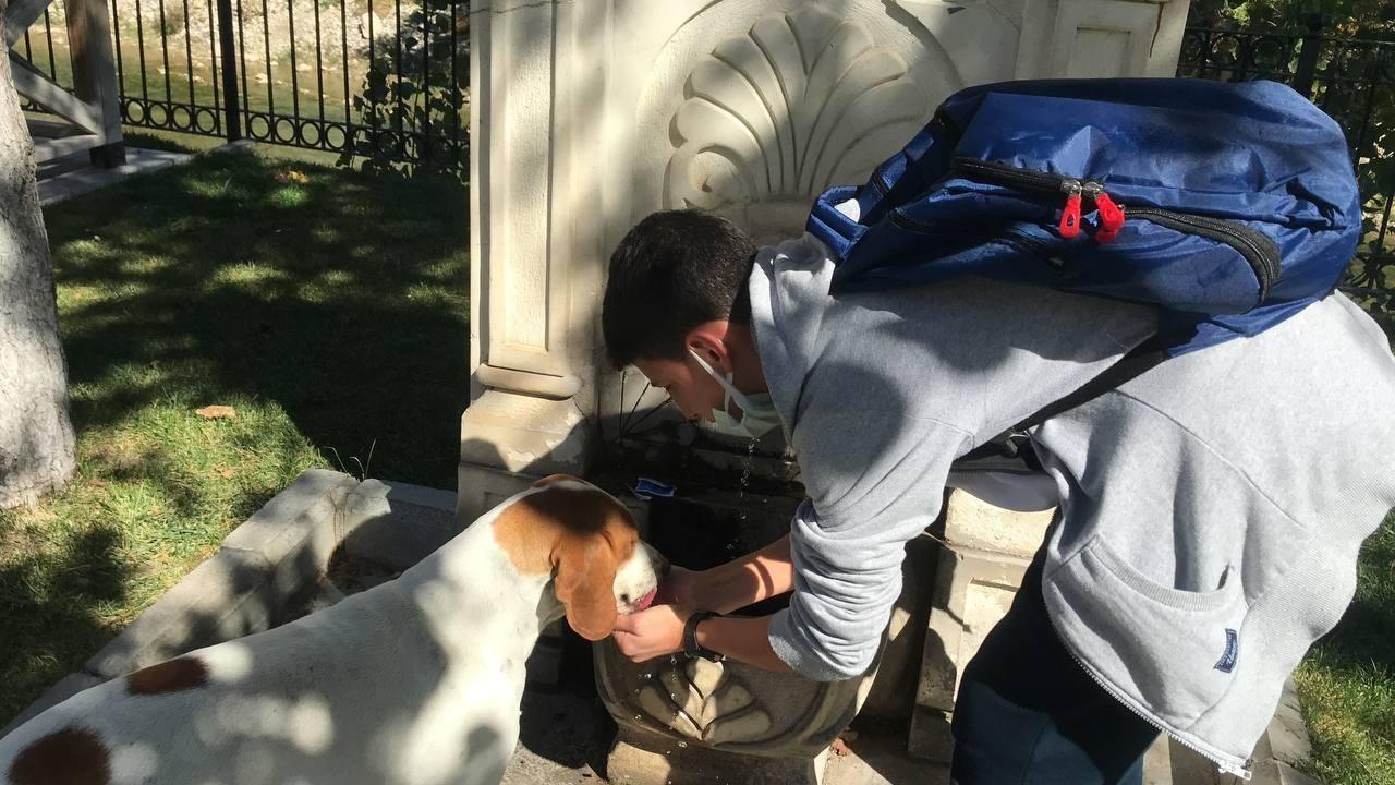 (Özel) Vefalı köpek, kendisine su içiren öğrenciyi okuluna kadar takip etti #bayburt