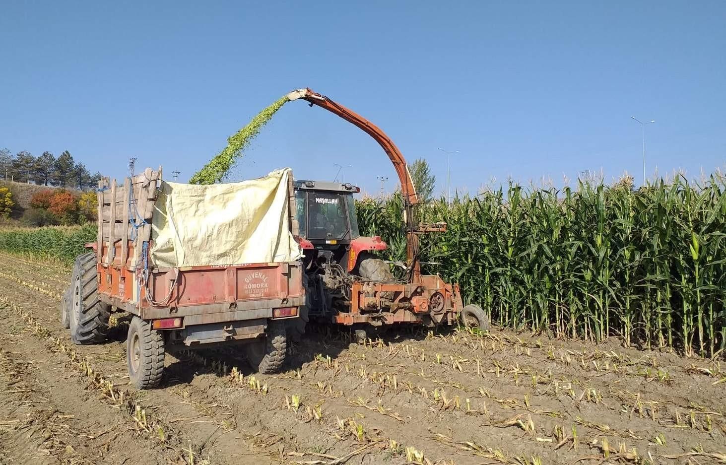 Sungurlu'da silajlık mısır hasadına başlandı #corum