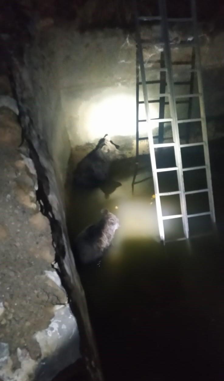Şemdinli'de sulama havuzuna düşen 2 yavru ayı kurtarıldı #hakkari