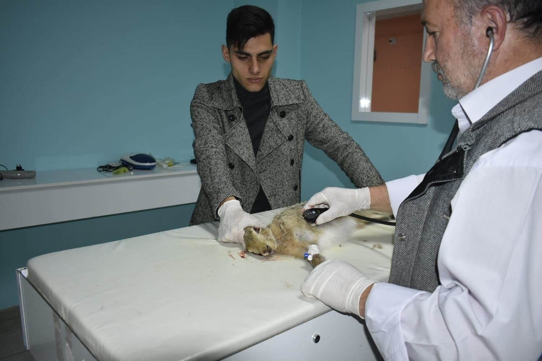 Yaralı yaban tavşanını veterinerde tedavi ettirdi #bayburt