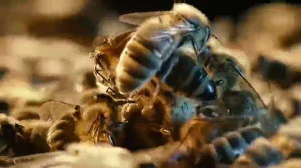 Kraliçe Arının Muhteşem Doğuşu Videosunu Izle Sabah Tv