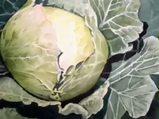 Lahana Brassica oleracea nelere iyi gelir? Lahananın Brassica oleracea faydaları nelerdir?
