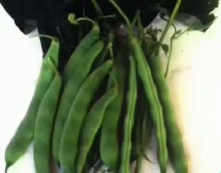 Fasulye (Phaseolus vulgaris) nelere iyi gelir? Fasulyenin (Phaseolus vulgaris) faydaları nelerdir?