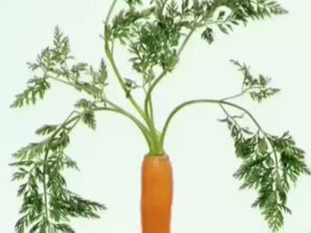 Havuç (Daucus carota) nelere iyi gelir? Havucun (Daucus carota) faydaları nelerdir?