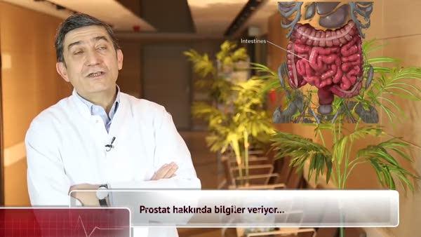 Prostat nedir?