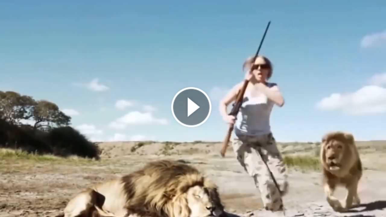 Aslan öldüren avcı çifte aslan saldırdı