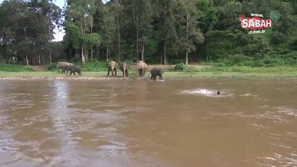 Yavru fil bakıcısı için suya atladı