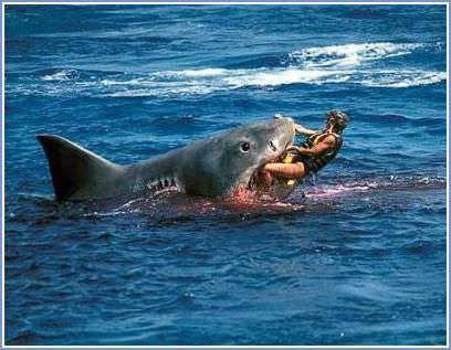 En Tehlikeli 10 Köpek Balığı Saldırısı